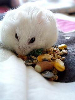 A Yuki Hobby: Storing Seeds