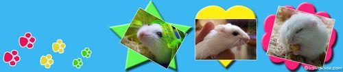 Yukimo/Hamster Banner