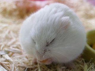 Peaceful Sleep-Eating