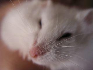 A Sleepy Moment
