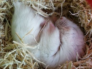 """""""Yuki-Sleeping"""""""